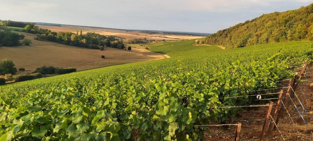 Visite du vignoble de champagne commentée, dans le viticole familial à Rouvres-les-Vignes, près de Troyes et Colombey-les-deux-eglises visite du vignoble et dégustation de nos cuvées champagne claude perrard