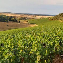 Führung durch den Champagnerweinberg im Familienweingut Rouvres-les-Vignes, in der Nähe von Troyes und Colombey-les-deux-eglises, Besichtigung des Weinbergs und Verkostung unserer Claude Perrard Champagner-Cuvées